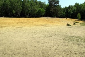 Wells Horsell sandpit